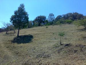 Venta de Terreno rustico en ARMADILLO DE LOS INFANTE