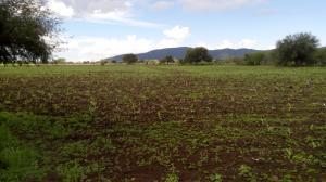 Venta de Rancho en SAN CIRO DE ACOSTA